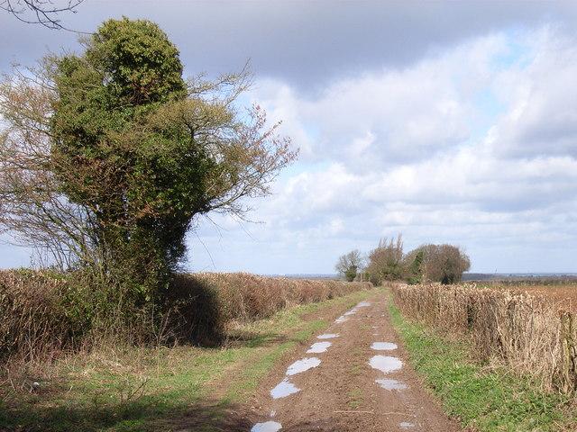 Down Lane
