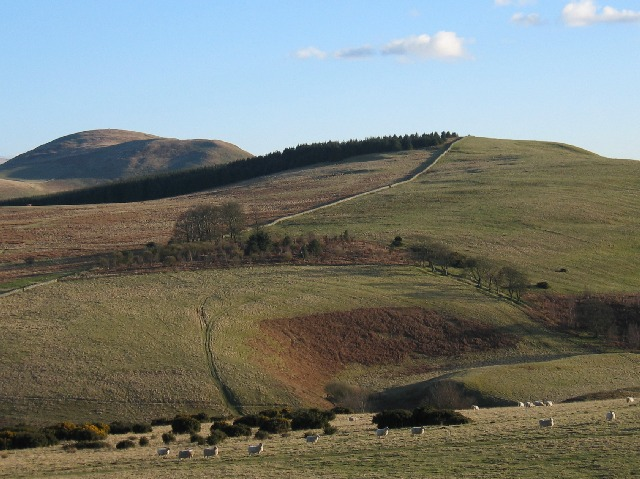 Northern Cheviots