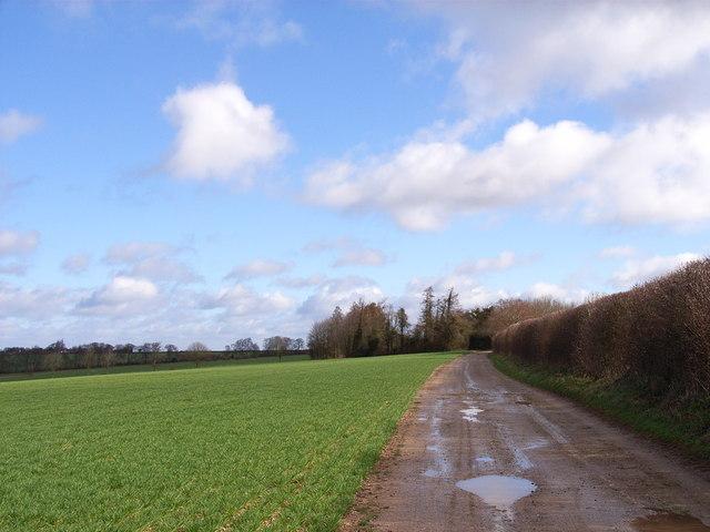 Byway near Upton Grey