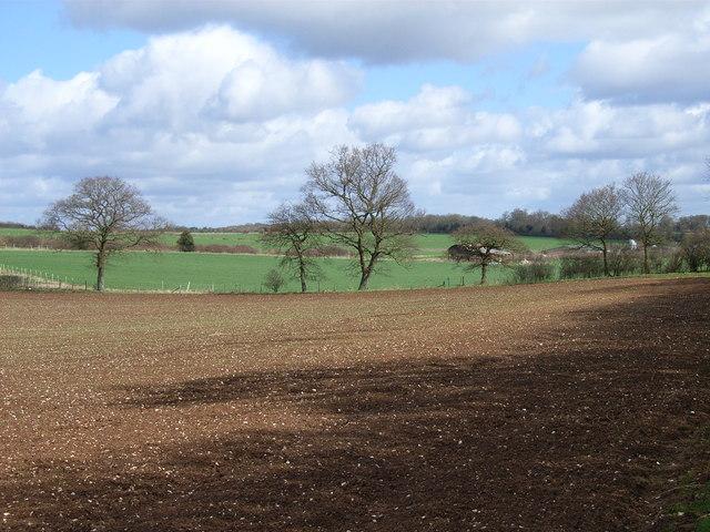 Farmland near Four Lanes End