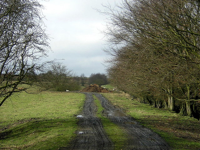 Line of Disused Railway Near Lodge Farm