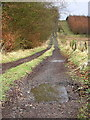 NS8272 : Track Leading to Shielknowes by Iain Thompson