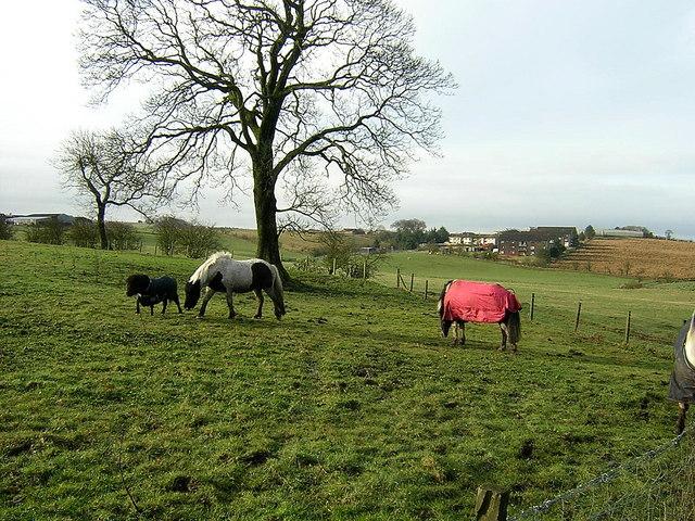 Horses Near Netherton of Glentore