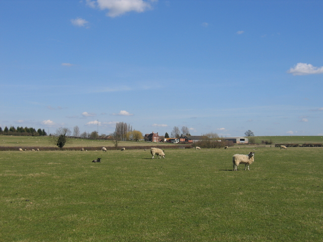 Sheep grazing near Hill Farm