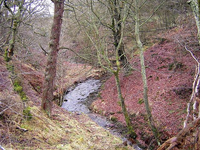 Small Glen Near Abronhill