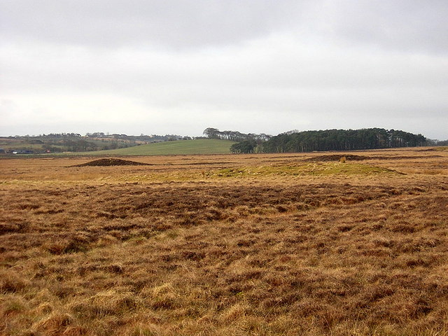 Bog Beside Avon Water