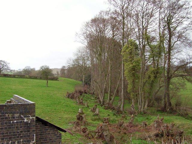 Coppice, Bower Farm.