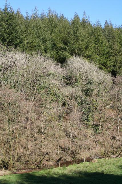 Molland: Beere Wood