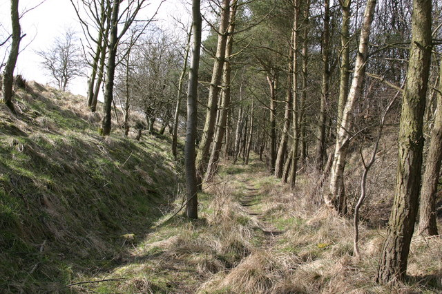 "Trackbed of the ""Wanney Line"""