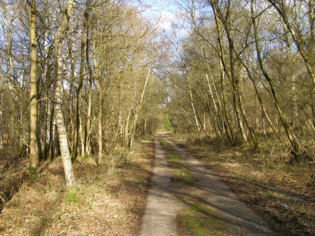Concrete track through Harewood Forest