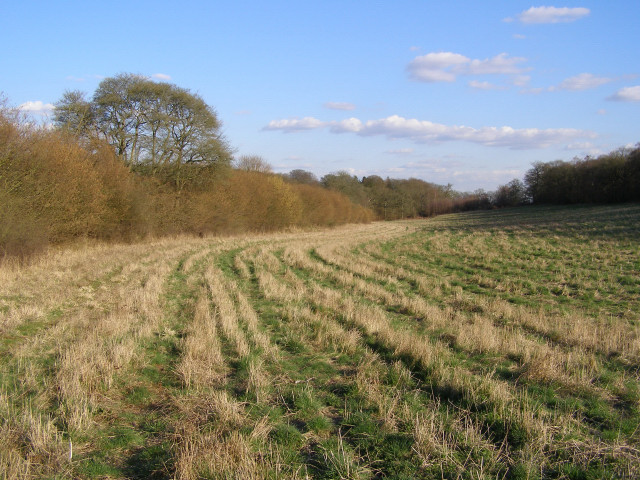 Farmland between The Middleway and Deadman's Plack Copse, Harewood Forest