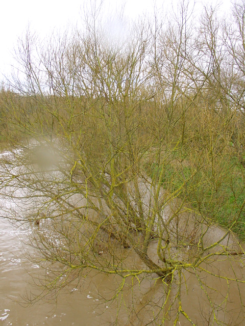 River Avon with high water levels