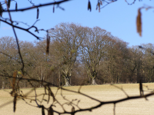 Ridgeway Copse from the verge of the A303, Harewood Forest
