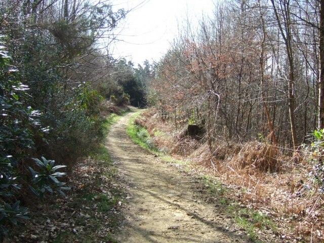 Bridleway near Radnor Road