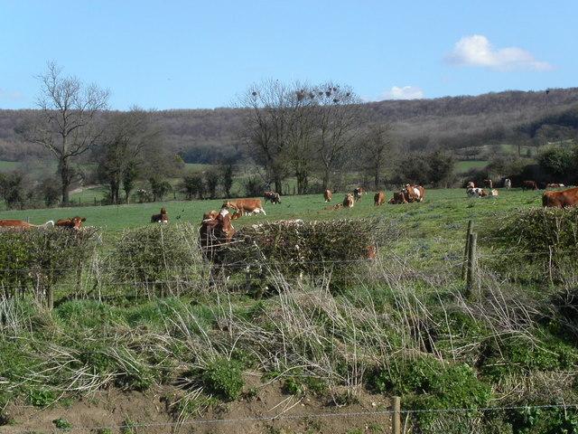 Farmland below Standish Woods