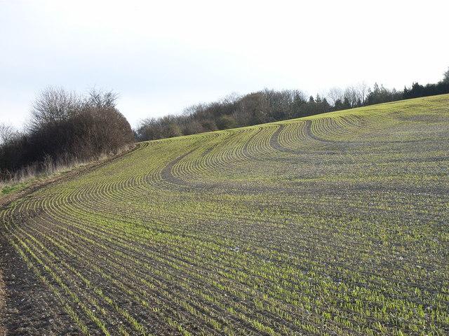 Farmland above Loudwater