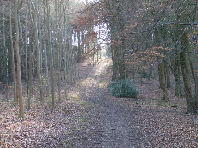 King's Wood