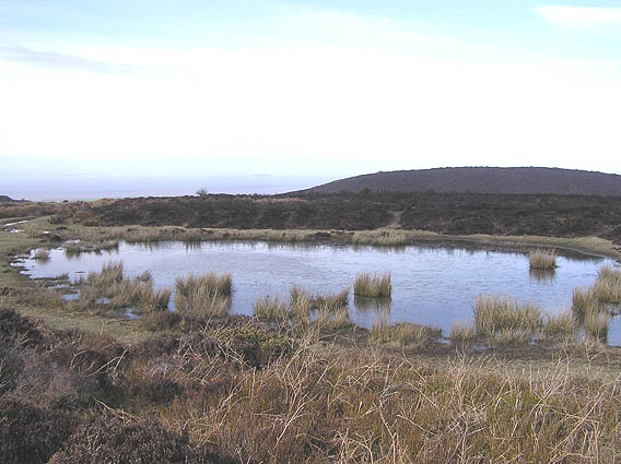 Wilmot's Pool, Quantock Hills
