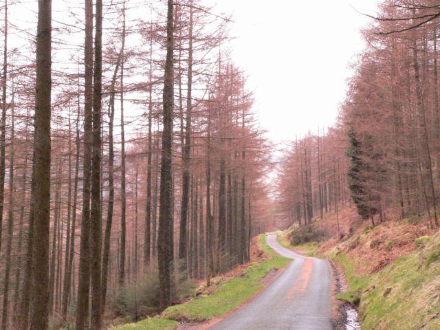 Cwm Hafodyredwydd, Near Cwm Penmachno.