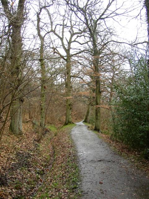 The Beech Walk,  The Vyne Estate, Sherborne St John