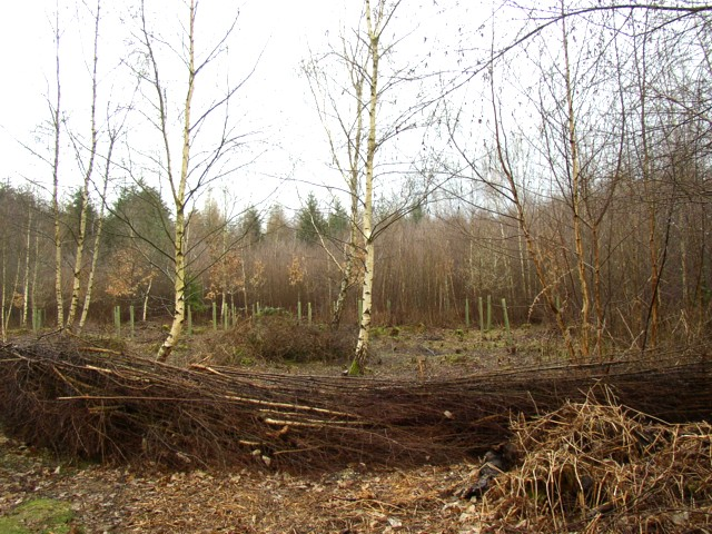 Woodland management, The Vyne Estate, Sherborne St John