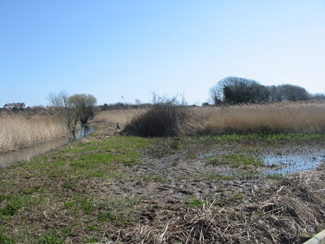 Reedbed, Radipole Lake Nature Reserve