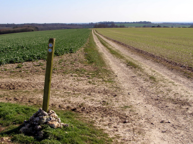 Bridleway junction, Longwood Warren