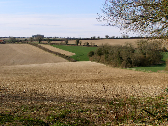 View towards Fawley Down from Old Down Lane, Morestead