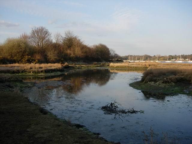 Tranquil Salt Marsh