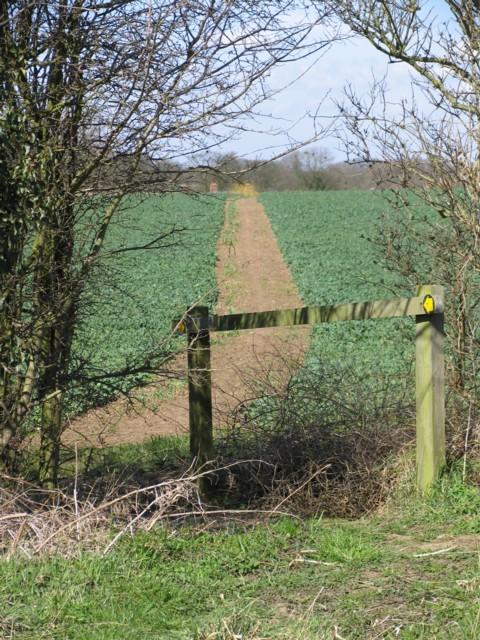 Footpath to Little Stretton across field