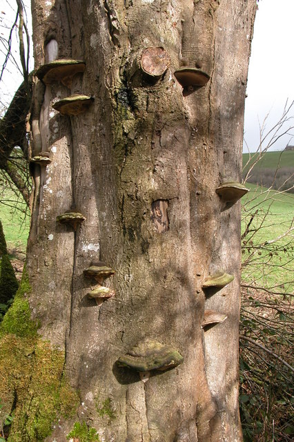 Fungi on a tree in the Hollocombe valley