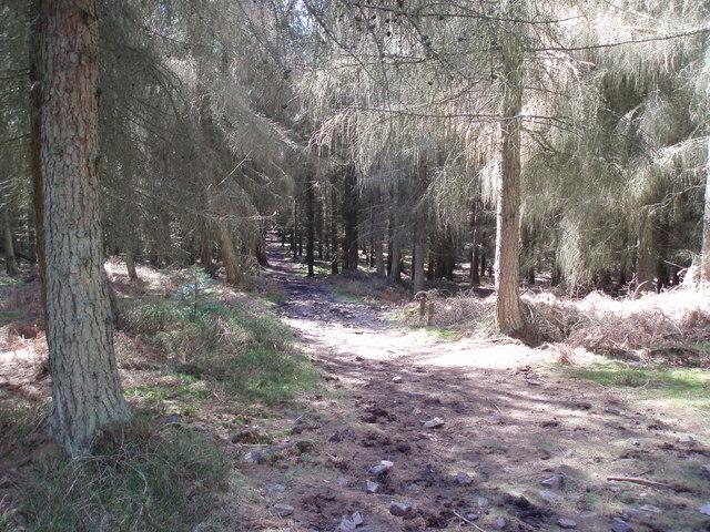 Dunster Park