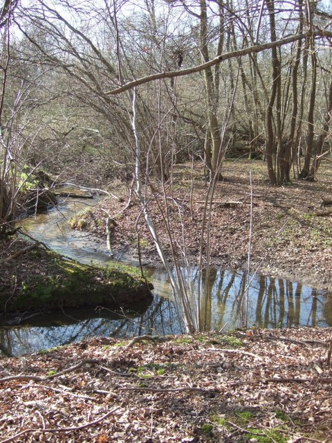 Stream and Copse