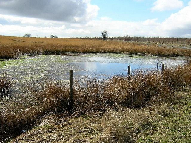 Road Side Pond Near Greengairs