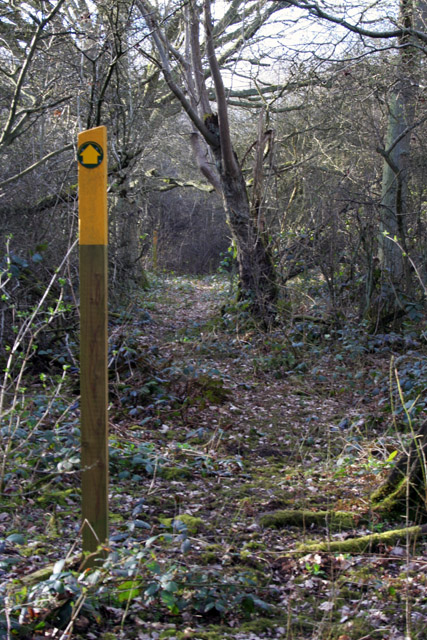 Twenty Acre Wood, Six Hills, Leicestershire