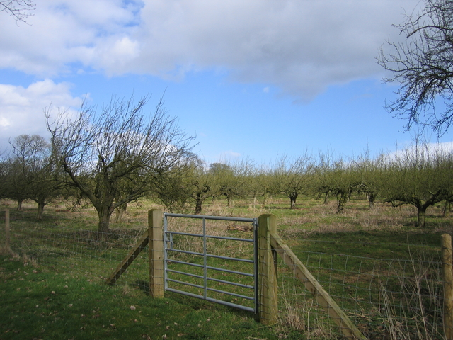 Orchard at Pitwell Farm