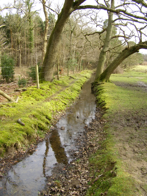 Drainage ditch alongside the Churchplace Inclosure, New Forest
