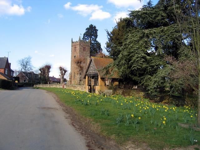 Daffs in Priors Hardwick