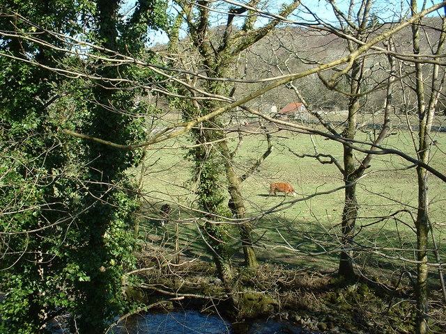 Farmland near Llanbedr
