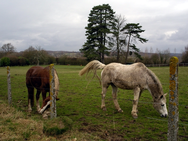 Horses in field north of Mount Hospital, Bishopstoke