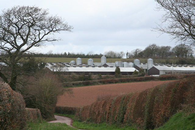 Hockworthy: poultry farm at Tower Hill