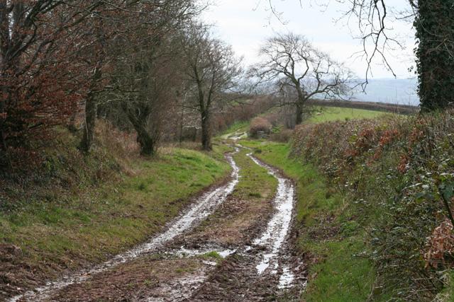 Sampford Peverell: Whitnage Lane