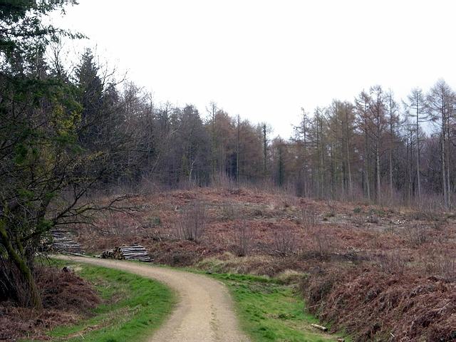 Clearing in Stoke Park Wood, Bishopstoke