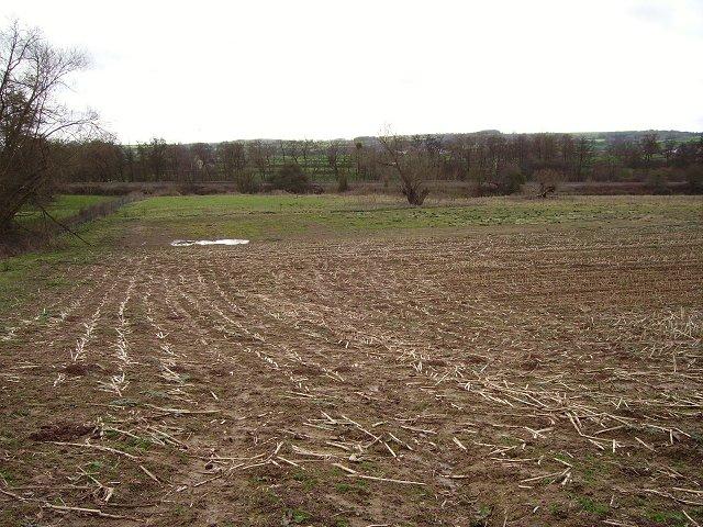 Wetland near Onibury