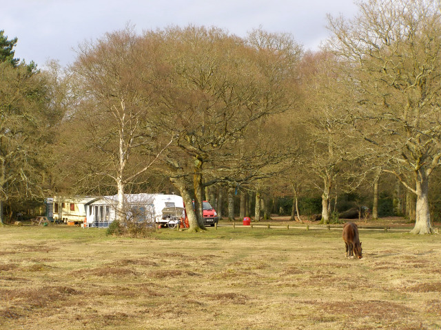 Ashurst Caravan and Camping site, New Forest