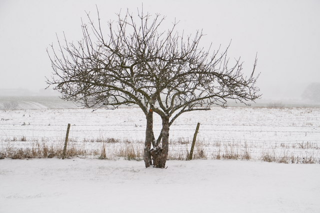 Roden in the snow