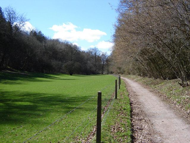 Cycle path near Chawton Park Woods