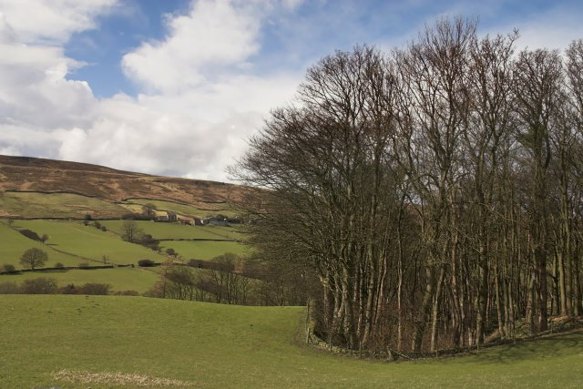 A small wood in Danby dale