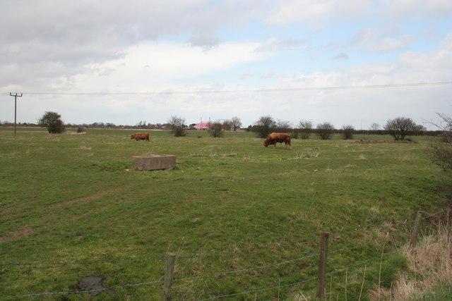 Farmland near Chapel St Leonards