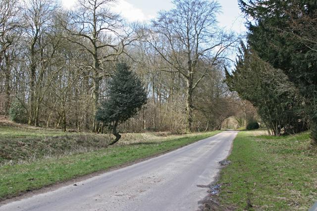 Road south of Brockwood Park